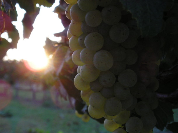 Arche Wines