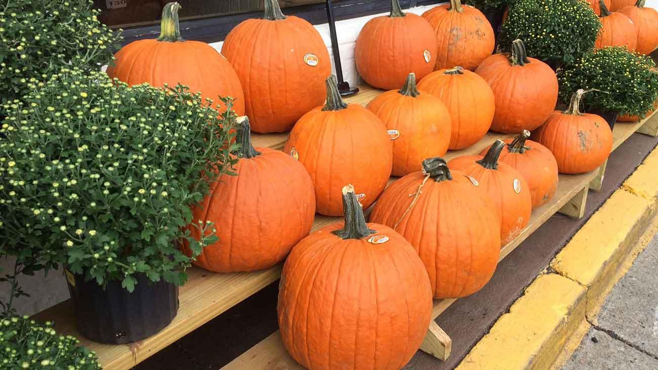 Lost Oak Pumpkin Carving Contest